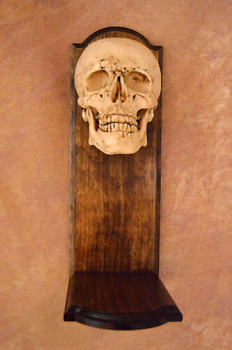 Classic Skull Wall Sconce on Wood Frame, Halloween Prop, NEW