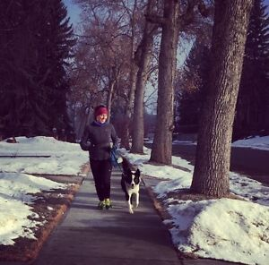 Dog Home Alone? Call Dog Walking by Emily