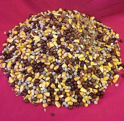 Pigeon Corn 2 Kg Wild Bird Doves Maize Pea Maple Pea Wheat