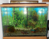 Aquarium (Fish Tank) with a wooden stand
