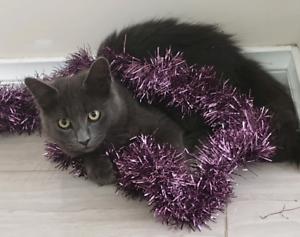 Smokey - 5mth old kitten, very playful