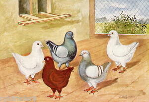 King-Pigeons-Refrigerator-Tool-Box-Magnet