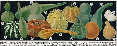 - 1941 Color Ad Vaughan's Seed Store 15 Varieties Gourds Farm Fall Harvest Decor