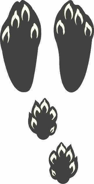 cotton tail track / rabbit sticker / paw print decal