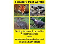 Yorkshire pigeon / pest control