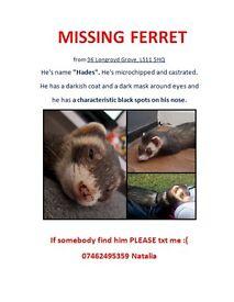 Missing Ferret :(