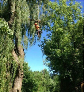 Kyle's Tree service/ Tree removal and pruning