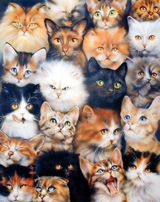 Cute Cats Breed Collage Pet Animal Kittens Art Print Poster  16X20