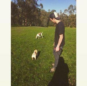 EXPERIENCED DOG WALKER - Northern Suburbs Preston Darebin Area Preview