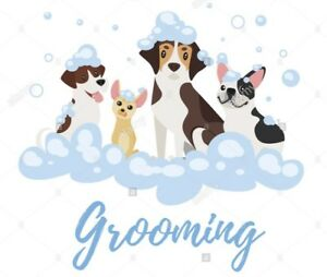 Looking for dog groomer apprenticeship