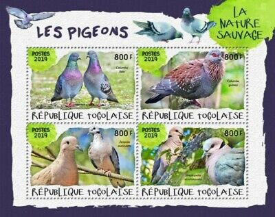 Pigeon Bird Rubber Stamp Feral Rock Pigeons or City Doves G17807 WM