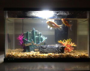 2 goldfish, tank and accessories