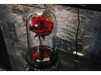 Beauty and the Beast eternal forever rose