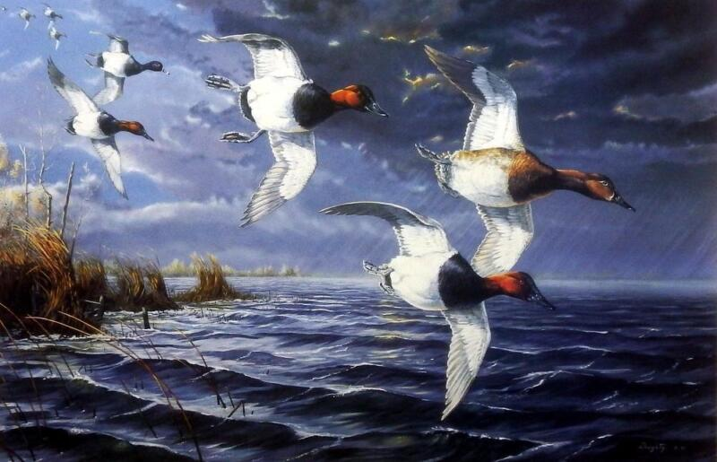 """Terry Doughty """"ahead Of The Storm"""" Canvasback Duck Art Print 24"""" X 16"""""""