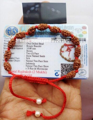2 Mukhi Rudraksha Bracelet / Two Face Rudraksh Wristlet Java Bead Lab Certified