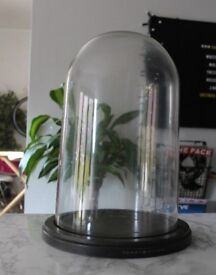 XL Huge Glass Taxidermy Dome Bell Jar Ex Display Case