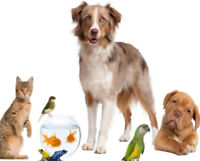 In Home Petsitting&Walking Services.10+years of experience.