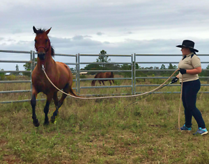 B-Z Mobile Horse Training and Problem Solving Urraween Fraser Coast Preview