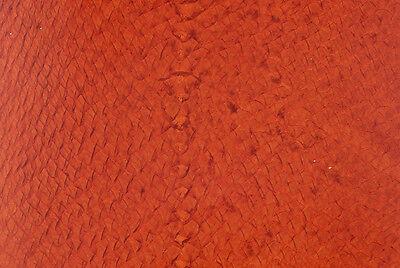 Orange Glaze Salmon (Salmon Skin Glazed Orange )