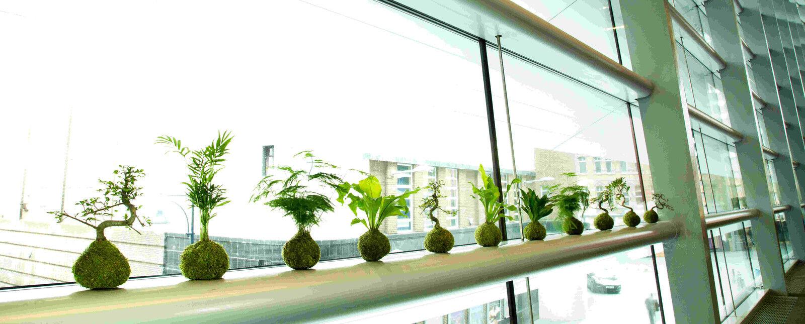 Tranquil Plants