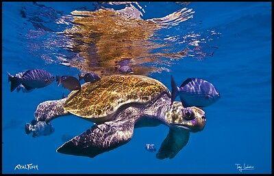 """Realfish H20 Series """" Play Mates """" Turtle Fish Mat Floor Mat Doormat 24x36"""