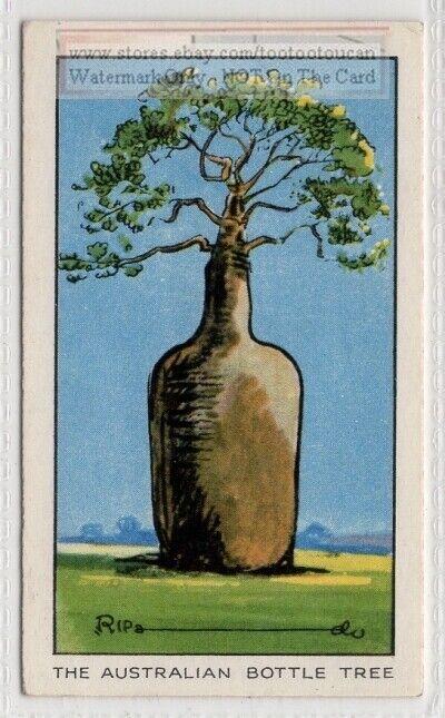 Queensland Australian Bottle Tree 1930s Ad Trade Card