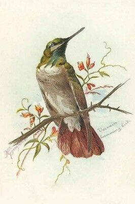 birdysdesigngallery