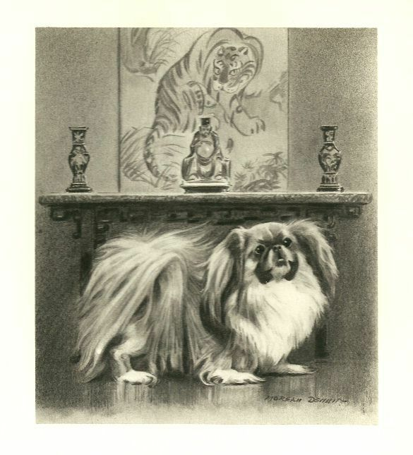 Pekingese - Vintage Dog Print - 1947 Morgan Dennis