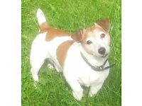 Mature male with small clean dog looking for a flat to rent in derby. Must accept benifits