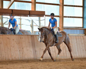 Talented Warmblood mare for Partboard