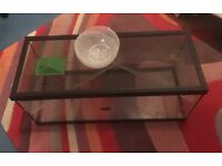 Glass gerbil or hamster cage/tank