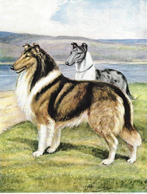 Collie - Vintage Color Dog Print - MATTED