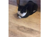 Black/white cat