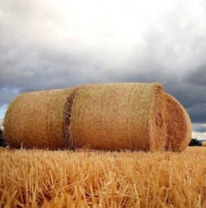 WHEAT STRAW FORSALE-reduced!!!