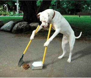 Needed: someone to clean up dog poop