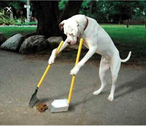 Needed someone to pick up dog poop