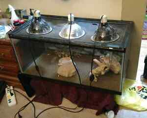 Bearded Dragons New Amp Used Pet Accessories In Ontario Kijiji Classifieds