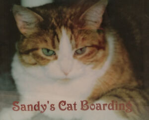 Boarding Find Or Advertise Pet Animal Services In Toronto Gta