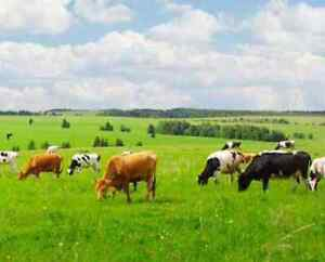 160 acres for grazing lease