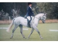 RE-ADVERTISED DUE TO TIMEWASTERS! Perfect Allrounder!