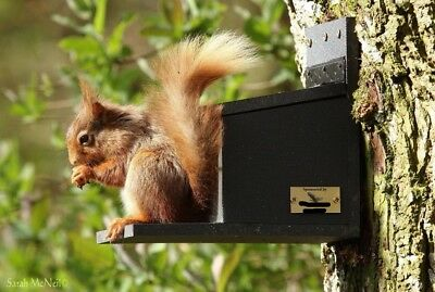 SPONSOR A SQUIRREL FEEDER WITH FEED  ALL PROCEEDS TO CHARITY