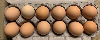 1 Dozen Ameraucana Mix Fertile Unwashed Eggs For Hatching Incubator