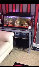 Aquarium fish tank 3ftx1ft