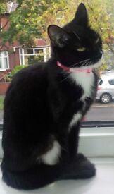 Lovely female cat looking for forever home