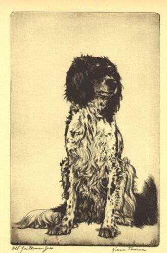 * English Setter #2 - 1935 Vintage Dog Print - Diana Thorne (RARE)