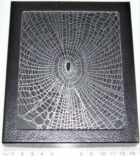 Orb weaver spider web framed preserved USA W20