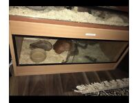 Vivarium Pet Equipment Amp Accessories For Sale Gumtree