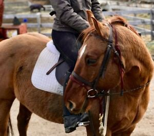 Horse for part board to right person or option to own
