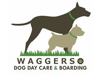 Waggers Dog Day Care & Home Boarding - all breeds and ages welcome - half or full day and long stay