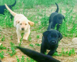 Adopt Dogs & Puppies Locally in Kamloops | Pets | Kijiji Classifieds